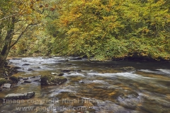 Autumn colours on the River Barle, near Dulverton, Exmoor National Park, Somerset, Great Britain.