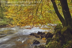 Autumn colours along the River Barle, near Dulverton, Exmoor National Park, Somerset, Great Britain.
