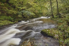 The East Lyn River at Watersmeet, near Lynmouth, Exmoor National Park, Devon, Great Britain.