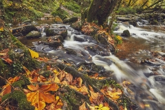 Autumn colours in ancient woodland along the River Teign, at Fingle Bridge, Dartmoor National Park, Devon, Great Britain.