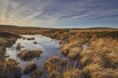 Moorland on Gidleigh Common, near Gidleigh, Dartmoor National Park, Devon, Great Britain.