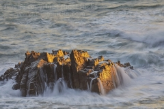 Offshore rocks at sunset, at Hartland Quay, north Devon, Great Britain.
