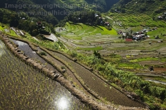 Rice terraces at Batad, nr Banaue, Luzon, Philippines.