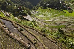 Rice terraces at Batad, nr Banaue, Luzon, Philippines.