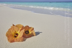 Havodda island, Gaafu Dhaalu atoll, the Maldives.