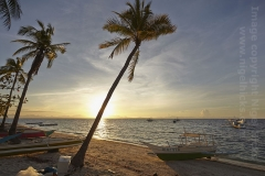 A coconut palm silhouetted by the early morning sun, on Bounty Beach, Malapascua Island, Cebu, Philippines.