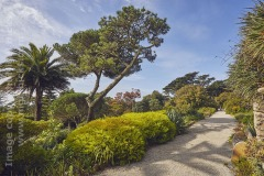 View along the Top Terrace, in Abbey Garden, Tresco, Isles of Scilly, Cornwall, Great Britain.