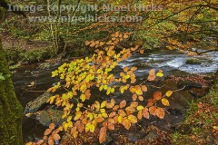 Autumnal woodland along the banks of the River Teign, near Fingle Bridge, Dartmoor National Park, Devon, Great Britain.