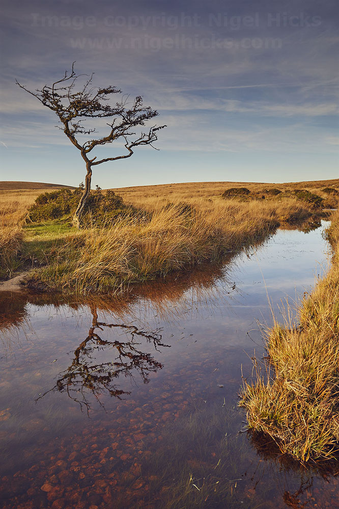 Dartmoor in autumn one-day photography course