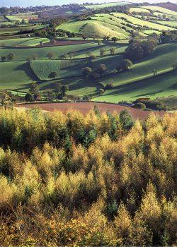 Autumn larches rural landscape greetings card