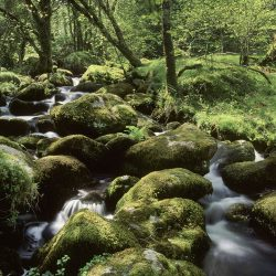 Hill stream woodland landscape greetings card