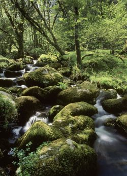 Hill stream woodland landscape greetings card