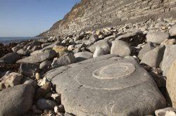Fossil beach shoreline landscape greetings card