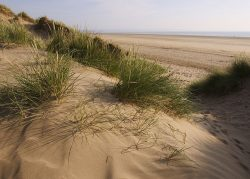 Sand dune coastal landscape greetings card