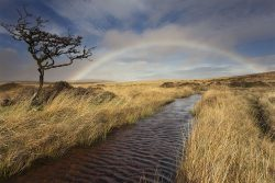 Wild moors landscape greetings card; moorland and woodland photography