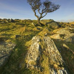 Moorland hawthorn landscape greetings card