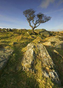 Moorland hawthorn landscape greetings card