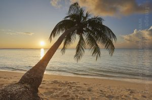 Coconut palm tree at sunset: Photography in the Maldives