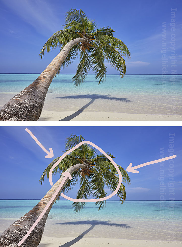 Photographic composition: analysis of a palm tree image.