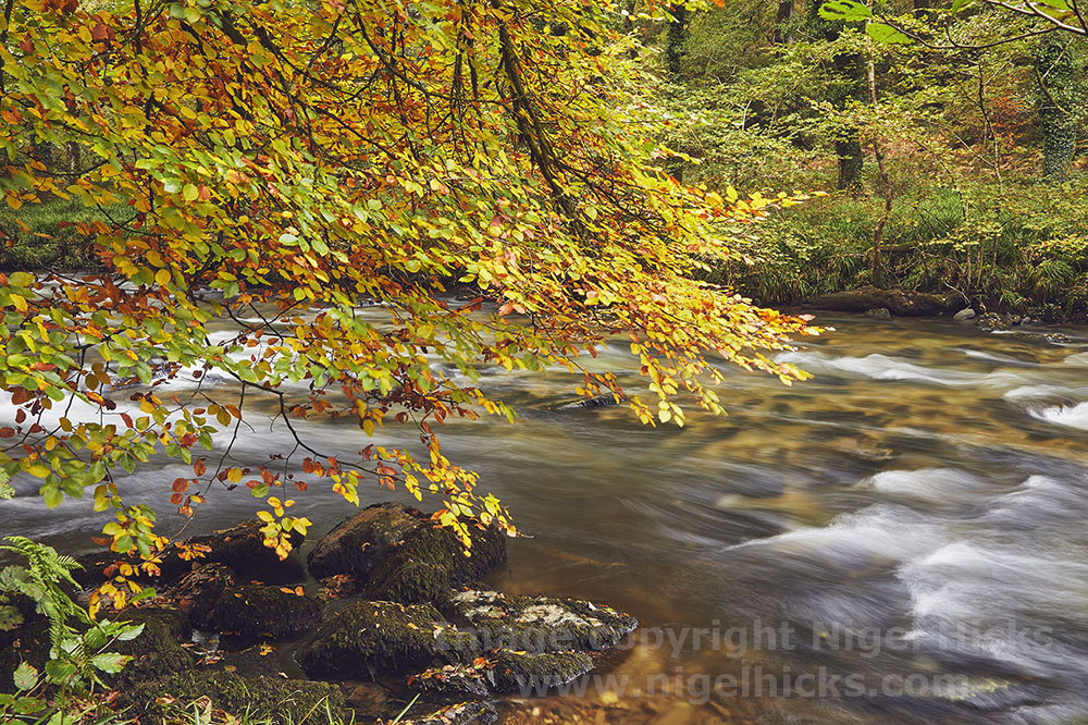 17th October 2020 one-day photography course images: autumn colours on the River Barle, Exmoor.