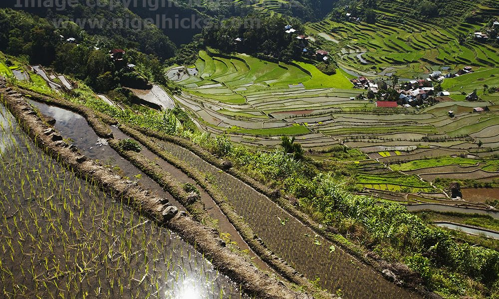 Rice terraces, Batad, near Banaue, Luzon, the Philippines