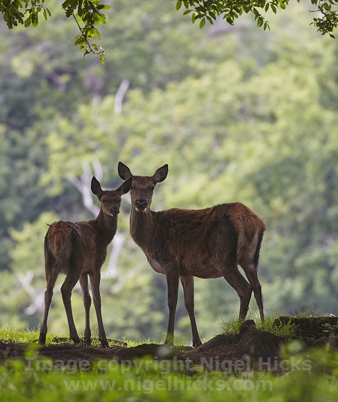 Wildlife photography one-day course