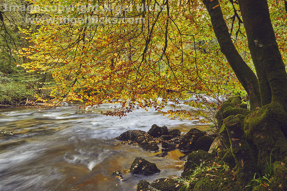 Exmoor in autumn photography course