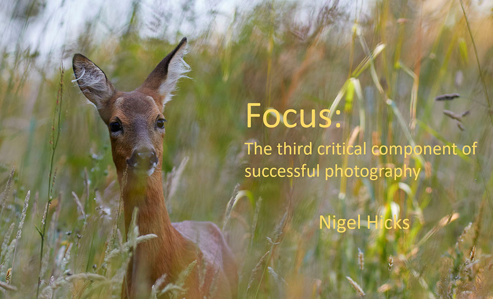 February 2021 Nigel Hicks Photography news. January's Focus talk.