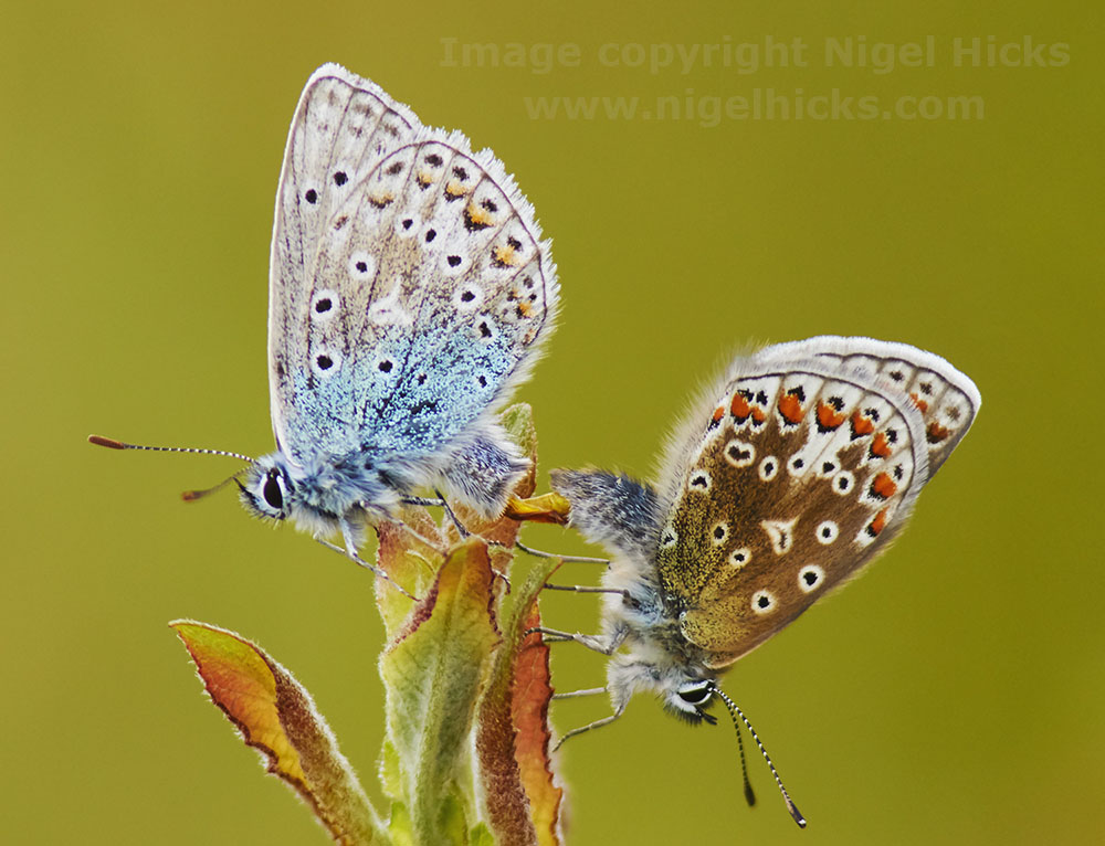 Wildlife Photography: Insects and Plants