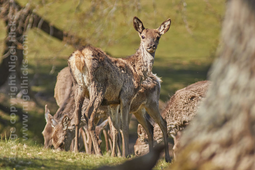 wildlife photography course