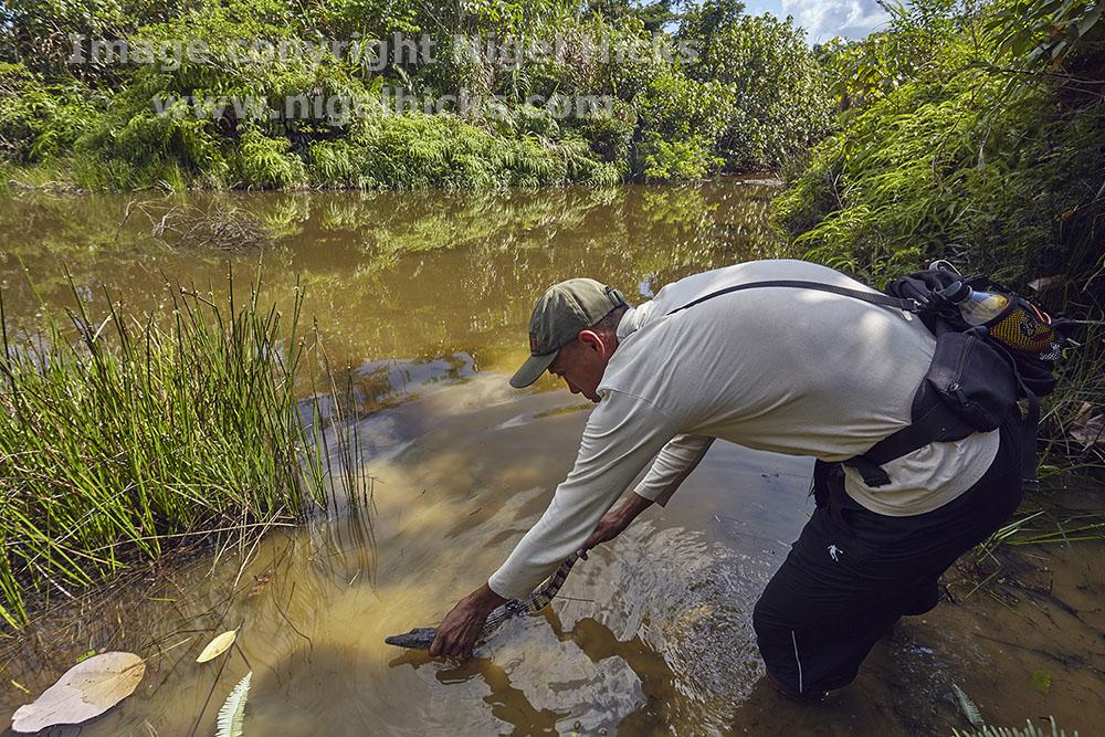 Storytelling through photography: Philippine crocodile