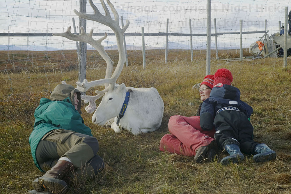 Storytelling through photography: Reindeer herding